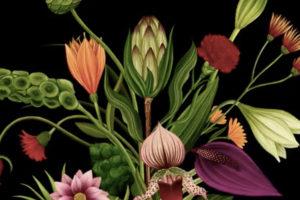 ikukids-animation-histoire-de-fleurs-AMKK-japon-botanique