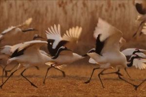ikukids-eredus-breathtaking-beauty-of-nature-beaute-de-la-nature-monde-vie