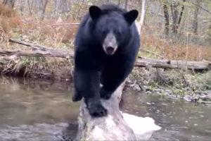 ikukids-Robert-Bush-vie-sauvage-pont-animaux-riviere-nature-milieu-naturel