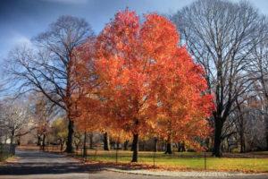 ikukids-automne-Central-Park-New-York-Etats-Unis