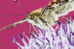 ikukids-uprising-macro-insectes-nature-eclosion-blooming