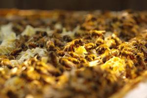 ikukids-abeilles-ruche-4k-miel-apiculture-apiculteur