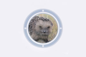 ikukids-le-herisson-a-la-loupe-animal-mammifere-insectivore-jardin-campagne-education