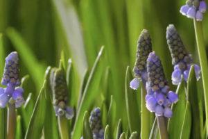 ikukids-valse-des-fleurs-epanouissement-blooming-time-lapse