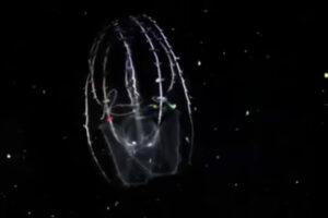 ikukids-les-ctenophores-un-plancton-colore-abysses-arc-en-ciel