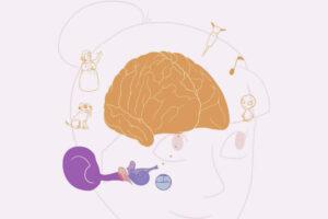 ikukids-ouie-oreille-entendre-sens-corps-humain-comprendre-audition-tympan