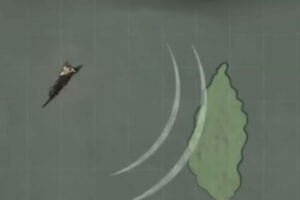 ikukids-chauve-souris-sonar-reperage-nuit-proie-chasse