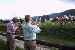 ikukids-un-concert-pour-vaches-musique-animaux