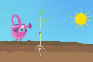 ikukids-cycle-de-vie-vegetal-haricaot-plantes-vegetaux-nature